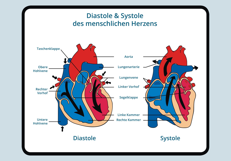 Blutdruck – seine Rolle für den Körper | WELLSANA